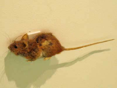 mouse2020.jpg